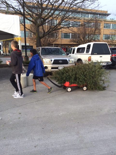 treee-chipping-arrival-3